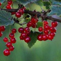 Сочные ягодки лета :: Татьянка *
