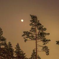 Диалог...   Луна и сосны... :: Александр Попович