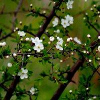 весенняя флора 4 :: Александр Прокудин