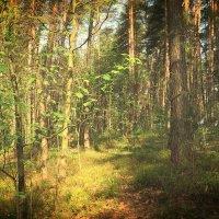 Весенний лес :: Ирина Олехнович