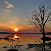 Крылатое солнце :: галина северинова