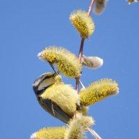 В золотой пыльце :: Тамара Бедай