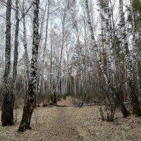Разбудила весна спящий лес ото сна ... :: Татьяна Котельникова