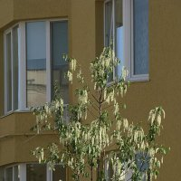 Сияющее деревце :: Syntaxist (Светлана)