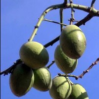 Висит груша, нельзя скушать :: Vanda Kremer
