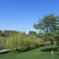 Весна в парке :: Анатолий Цыганок
