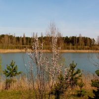 весенний берег озера :: Александр Прокудин