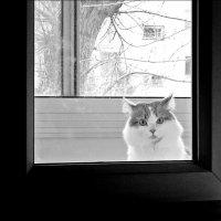 ...На улице минус 1, а его забыли на балконе, ещё ночью, когда ещё другое число было... :: Виктор Катин