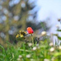 Магия весеннего света и цвета :: Тамара Бедай