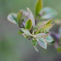 Посмотри на ветки клена – сколько носиков зеленых! :: Tatiana Markova