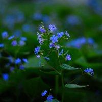 ...просто   цветы..... :: Георгий Никонов