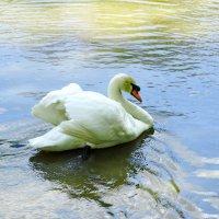 Самец охраняет самку на гнезде. :: vodonos241