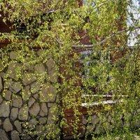 Сквозь юную зелень берез... :: Наталья Ильина