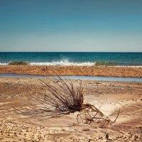 Черное море. Пляж Янтарь. :: Boris Khershberg