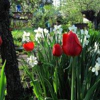 Весна ликует :: Gen Vel