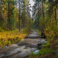 В весеннем лесу :: vladimir Bormotov