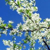 Чудесный май :: Алла Захарова
