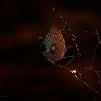 Смертельная красота :: Pepsovich