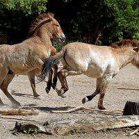 Резвые лошадки :: Alexander Andronik