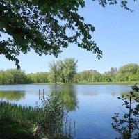 Ашманн парк, озеро Лесное :: Маргарита Батырева