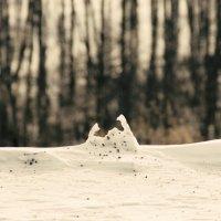 Краб замерз) :: Виктория Большагина