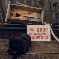 Остатки былой роскоши :: Evgenija Enot