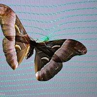 Метелик в неволі :: Степан Карачко