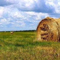 Заготовка сена. :: Сергей