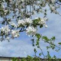 И снова весна... :: Анатолий