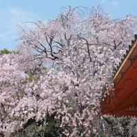 Япония. Киото.  Хейан дзингу. :: Виктория