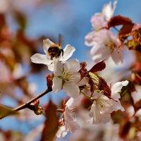 Весна. :: Евгений Яхим