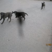 Собаки :: Smit Maikl