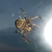 Паук за стеклом в ночи :: Светлана Рябова-Шатунова