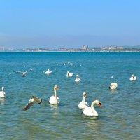 море и лебеди в мае... :: Николай Иванович Щенов