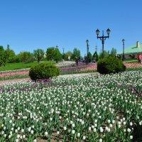 Тюльпаны в Царицыно :: Анатолий Колосов
