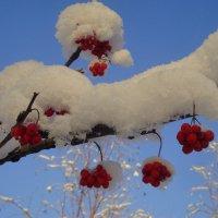 Пышный снег :: Галина Козлова