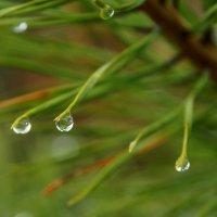 Капли дождя :: Наталья Т