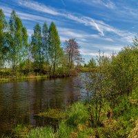 Майское утро 3 :: Андрей Дворников