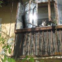Кот на Балконе :: Smit Maikl