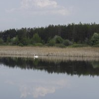 лебединая территория :: оксана