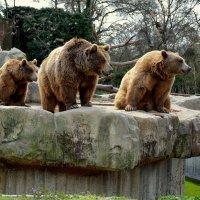 Три медведя :: Валентина Коряченцева