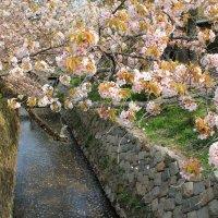 Япония. Киото. Философская тропа... :: Виктория