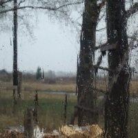 Картина дождя :: Светлана Рябова-Шатунова