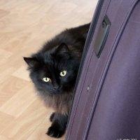 Коты :: Liudmila LLF