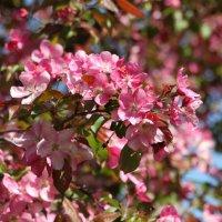 Цветы :: Андрей