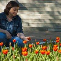В тюльпанах :: Павел Серов