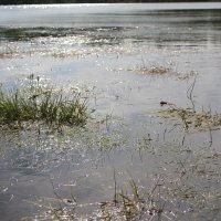 вода :: Светлана Рябова