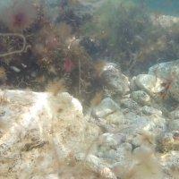 подводные камни :: Giant Tao /