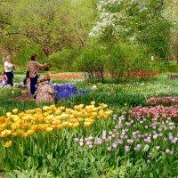 Хорошо цветы у нас в садочке... :: ТаБу