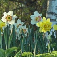 Весна! Неужели весна!! :: Владимир Гилясев